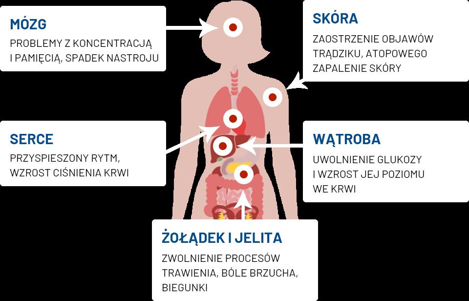 Jak powstaje stres w organizmie – infografika