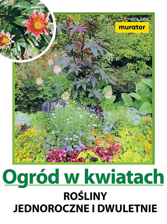 Ogród w kwiatach. Rośliny jednoroczne i dwuletnie