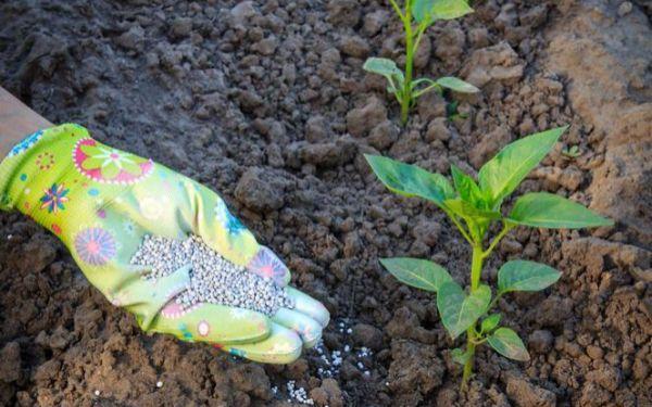Jak nawozić warzywa w ogrodowym warzywniku